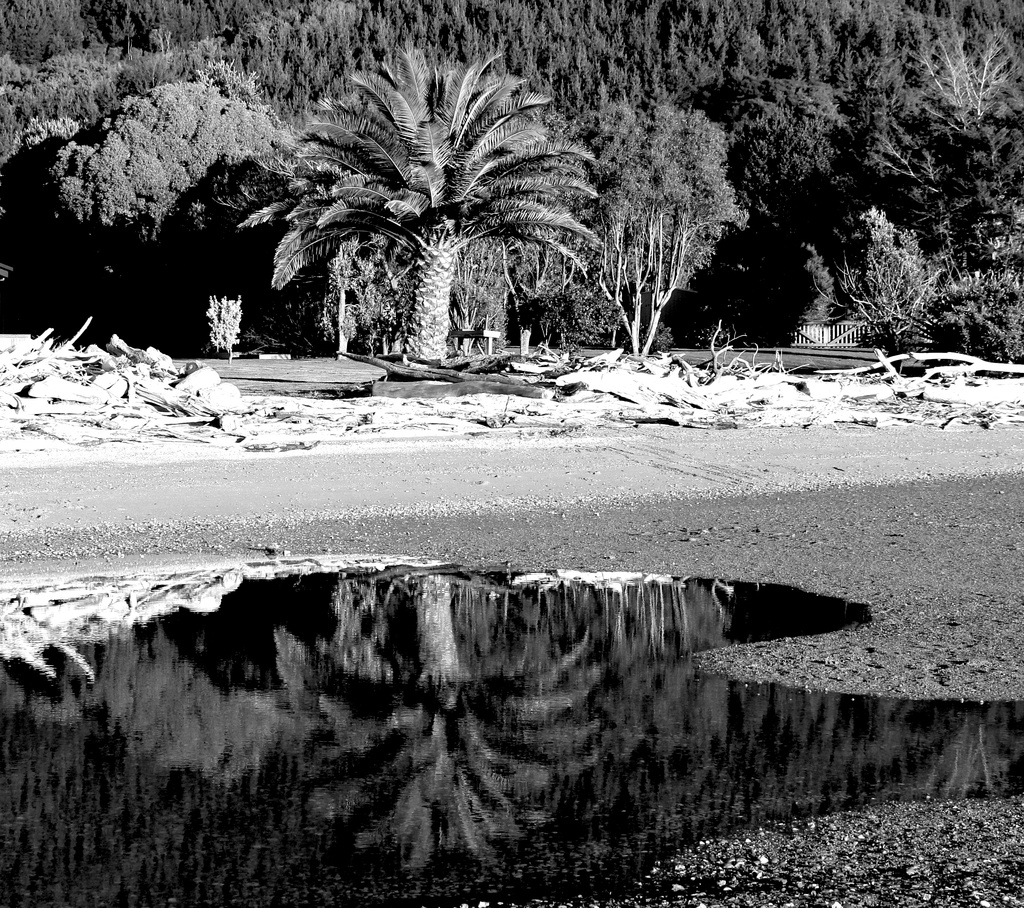 Beach garden reflections  by kiwinanna