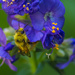 Busy Bee on Blue Blooms by princessleia