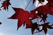 3rd Jun 2014 - Autumn leaves
