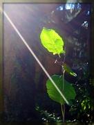 9th Oct 2010 - Sunlight streaming