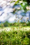 5th Jun 2014 - Abstract and Grasses...