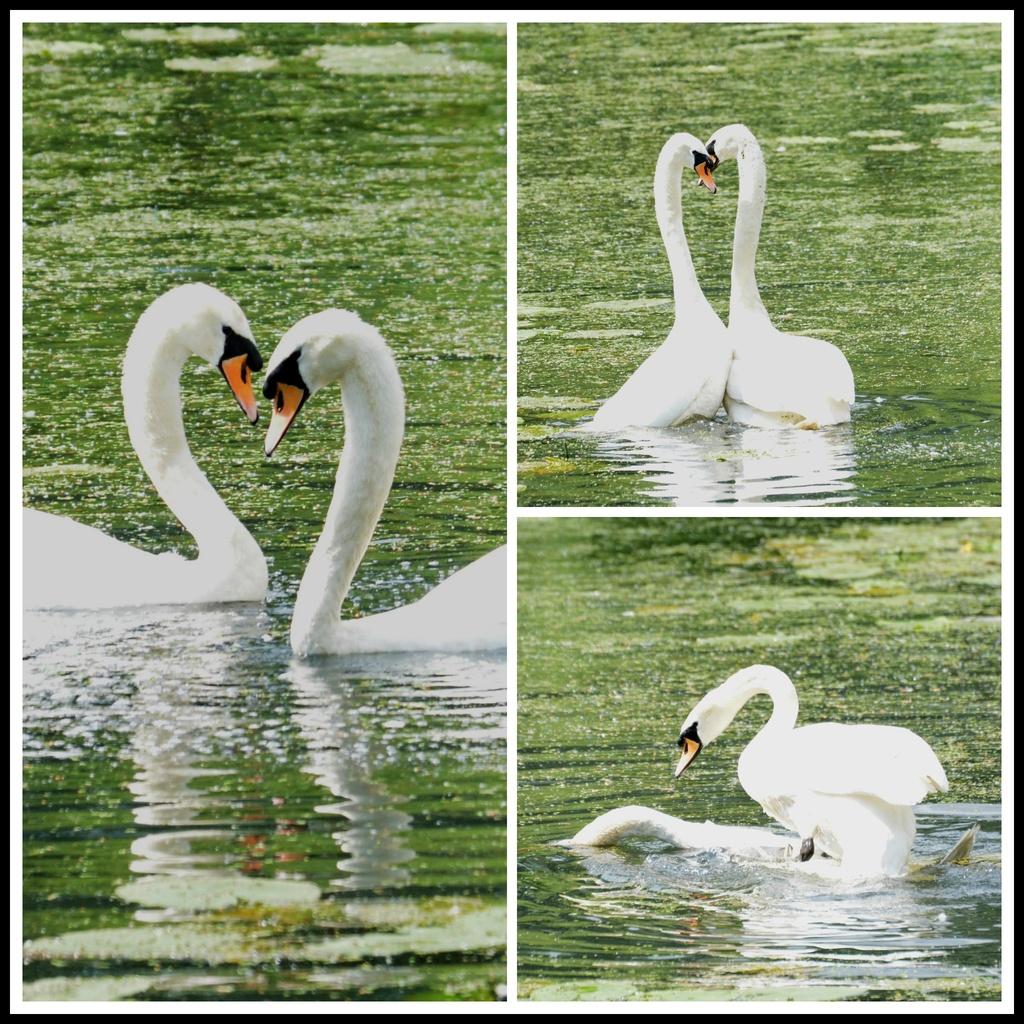In love by rosiekind