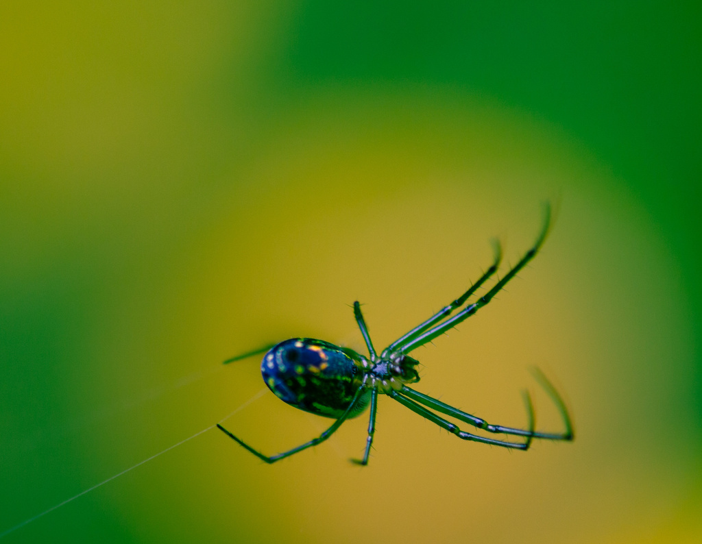 I Love This Spider by darylo