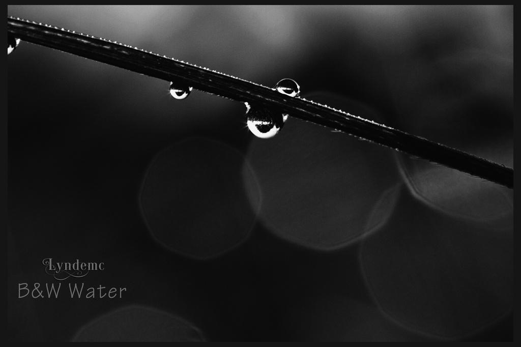 Dewdrop Deciduous by lyndemc