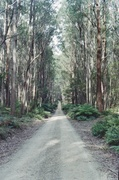 6th Jun 2014 - Forest road