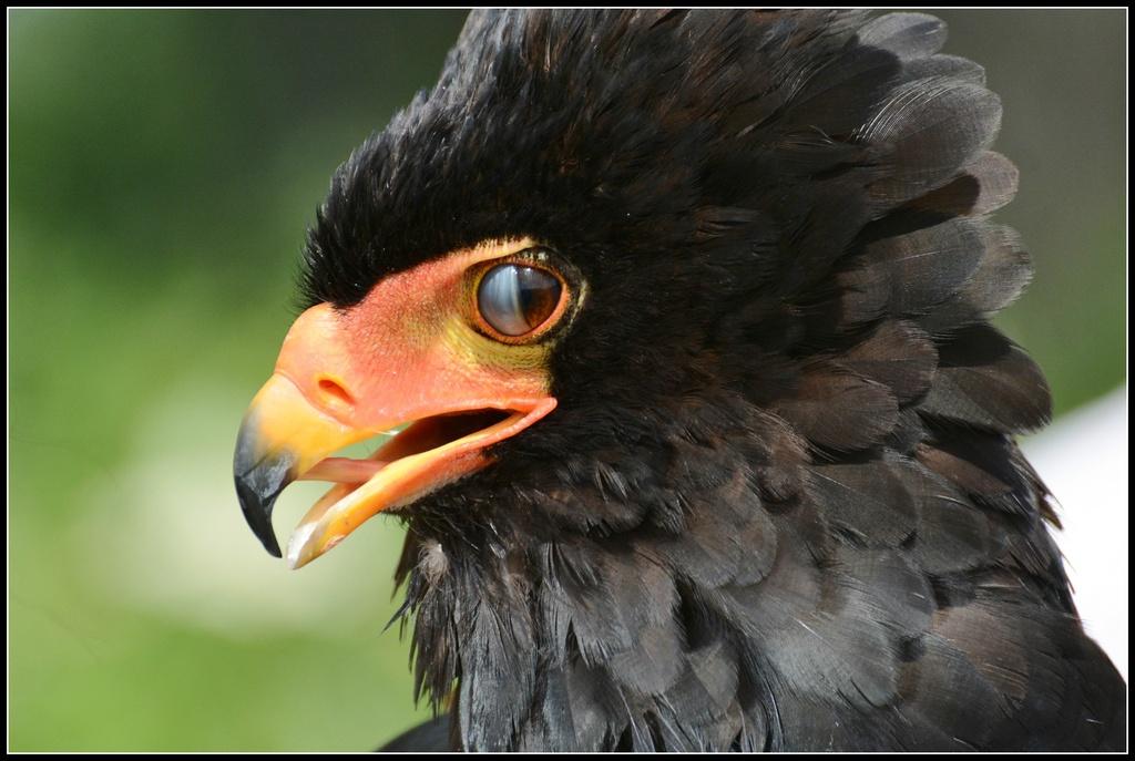 What a beak by rosiekind