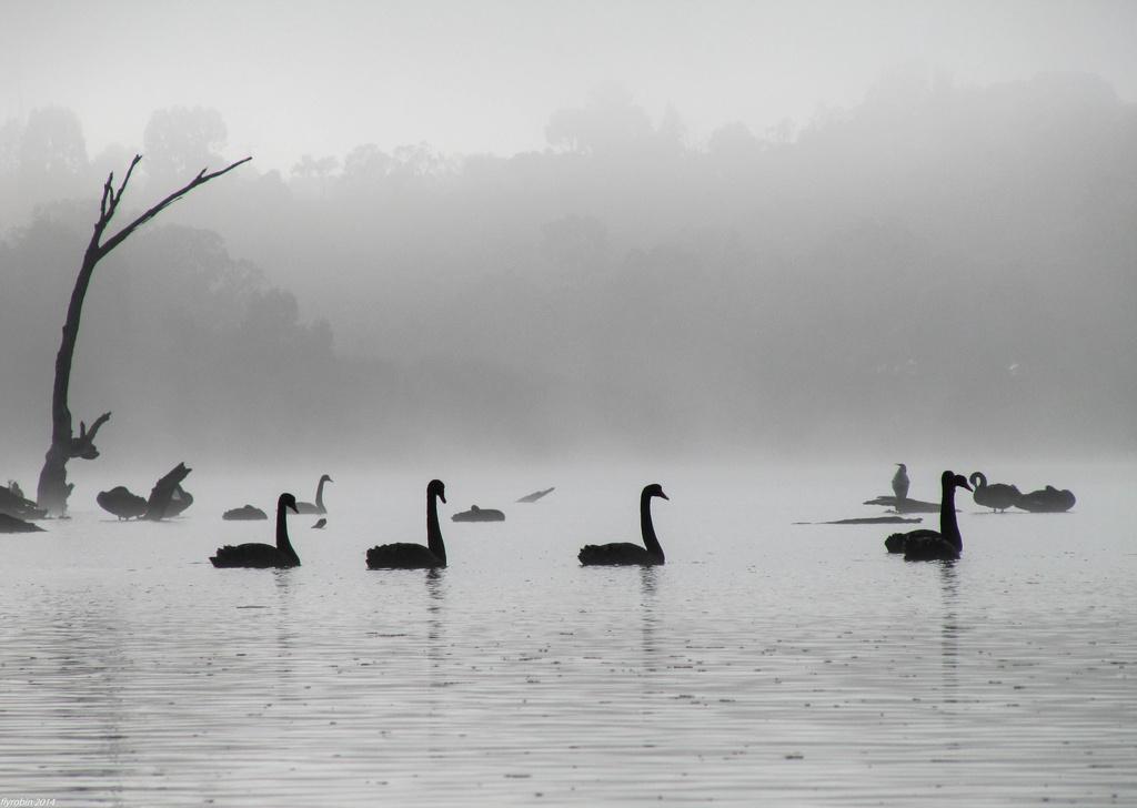 Emerging from the fog by flyrobin