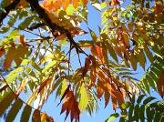 9th Oct 2010 - Autumn shades (2 )