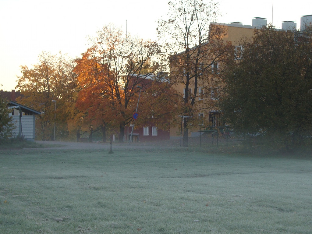 365-First frost DSC05415 by annelis