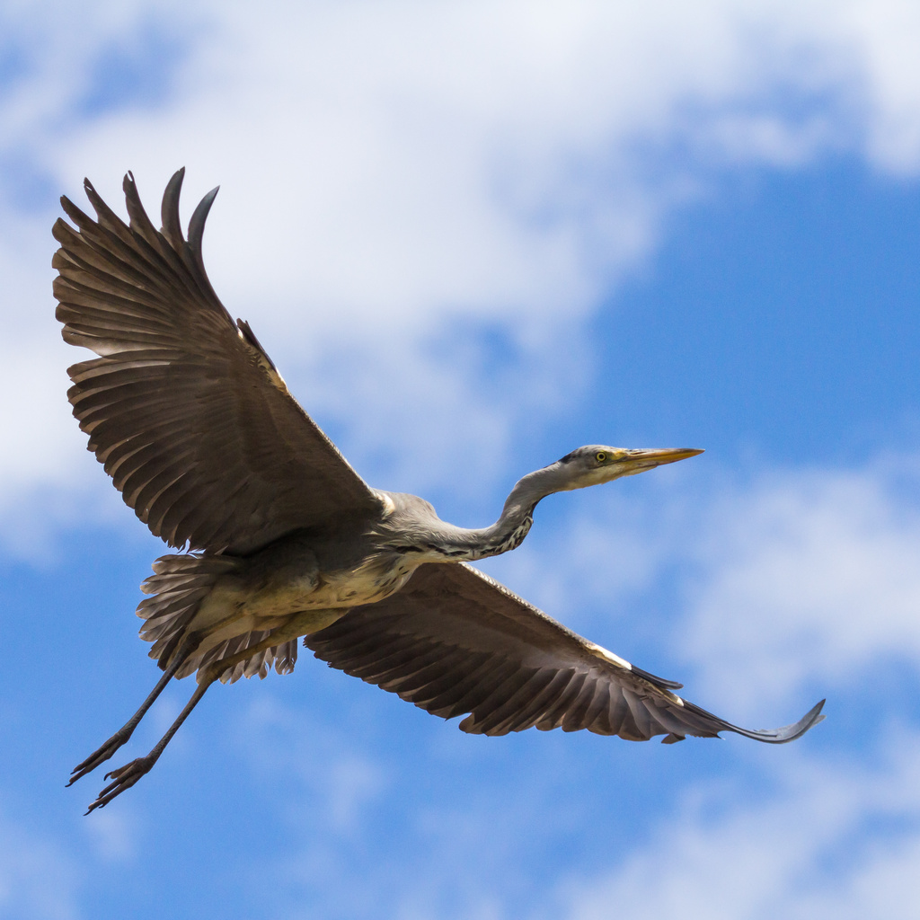 2014 06 08 - Fly By by pixiemac