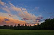 8th Jun 2014 - Midsummer Nights
