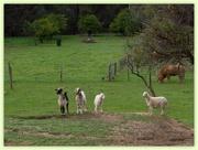 8th Jun 2014 - Country live in urban Perth