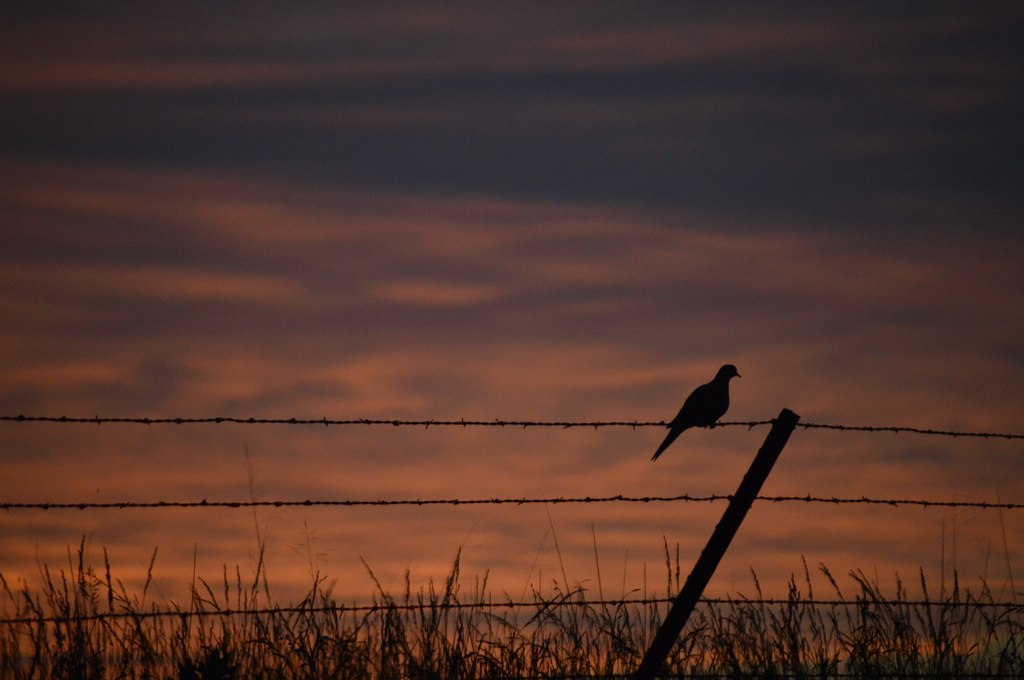 Lonesome Dove by kareenking