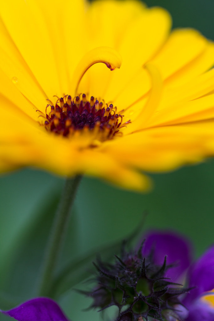 2014 06 09 - Flower Power by pixiemac