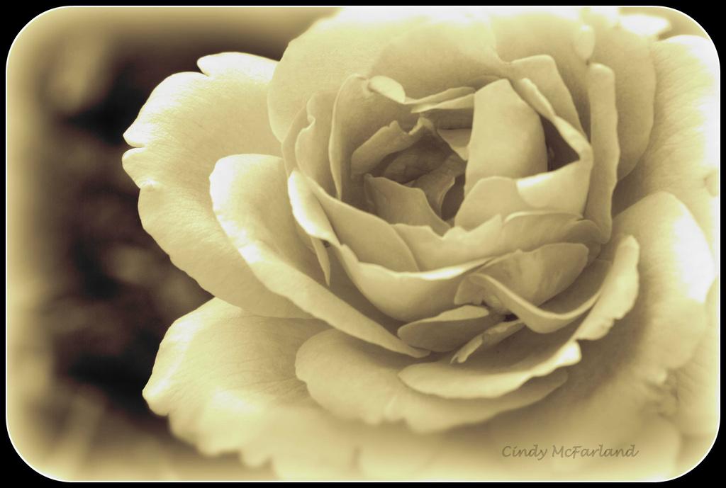 Look for beauty by cindymc