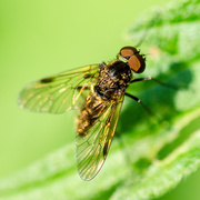 10th Jun 2014 - Fly - 10-06