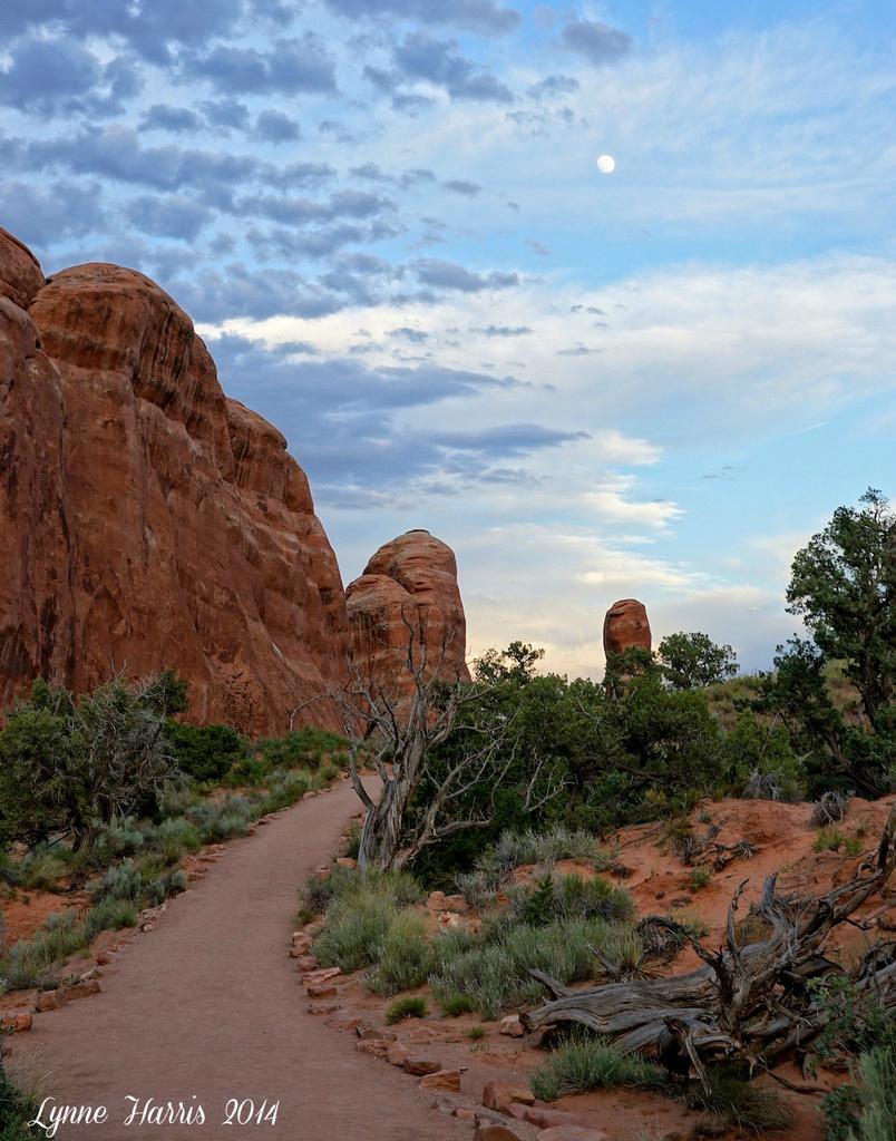 Hiking Back by lynne5477