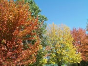 9th Oct 2010 - Autumn Wonderland
