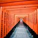 Fushimi Inari Torlis by taffy