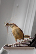 12th Jun 2014 - Nesting