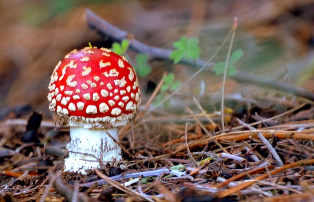 Magic Mushroom by salza