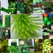 My Month of Green by bizziebeeme
