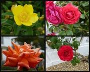 19th Jun 2013 - Flowers in Selsey