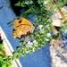 Leptirić u dvorištu by vesna0210