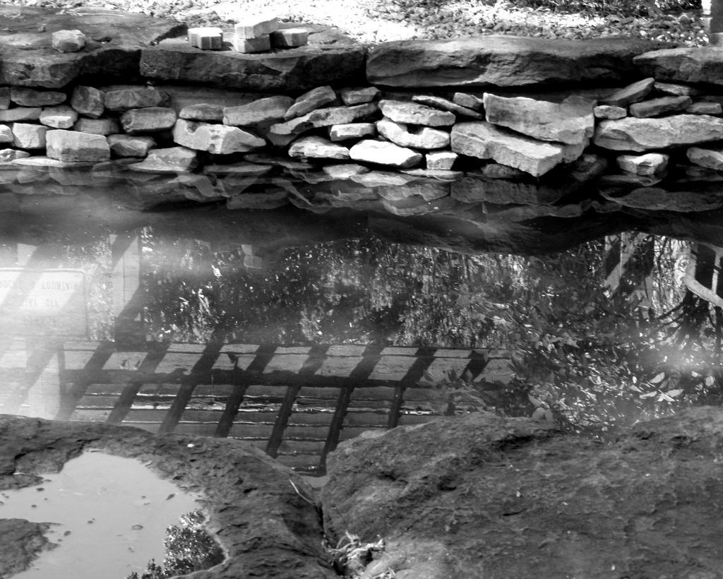 June 13: Water: Murky Reflections by daisymiller