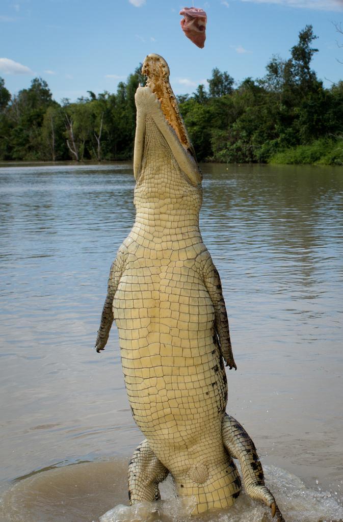 Jumping Crocodiles by bella_ss
