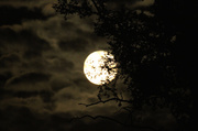 13th Jun 2014 - Full Moon Rising
