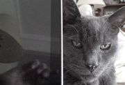 2nd Jun 2014 - Computer vs Cat