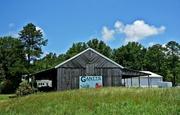 16th Jun 2014 - Gantts Farm