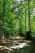 17th Jun 2014 - River Path