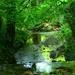My little oasis by ziggy77