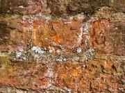 10th Oct 2010 -  Brick Wall .