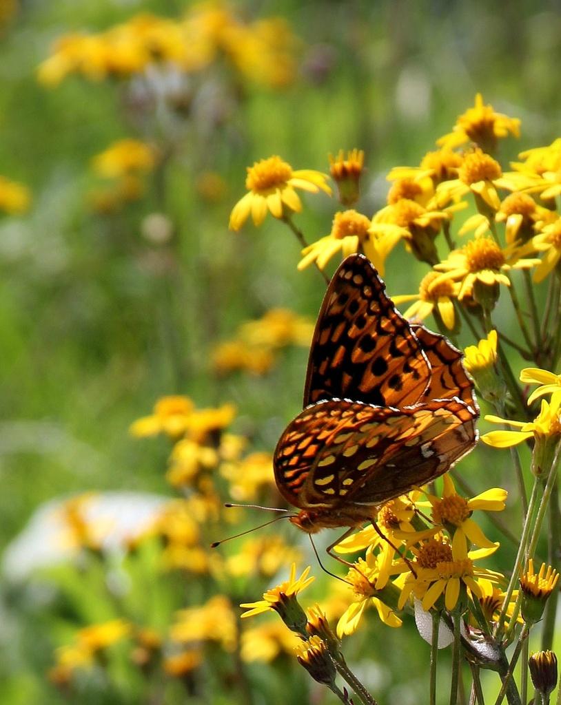 Flutterbug by calm
