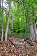 19th Jun 2014 - River Steps,  vertical oritentation
