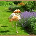 Flamingoes And Flowers by carolmw