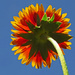 Bright Colors Against A Blue Sky by milaniet