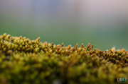 19th Jun 2014 - Mini Landscape