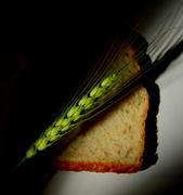19th Jun 2014 - Our Daily Bread....