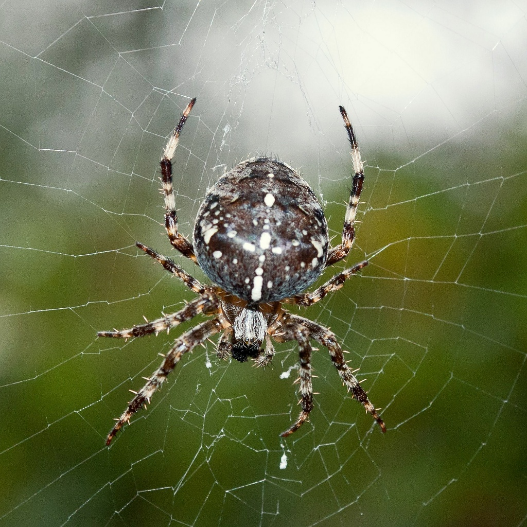 Itsy Bitsy Spider by andycoleborn