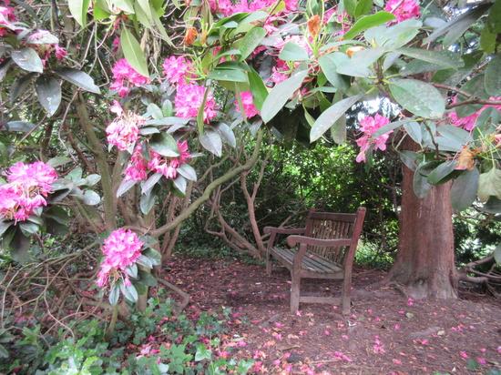Hidden bench by sarahhorsfall