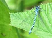 7th Jun 2014 - Dragonfly