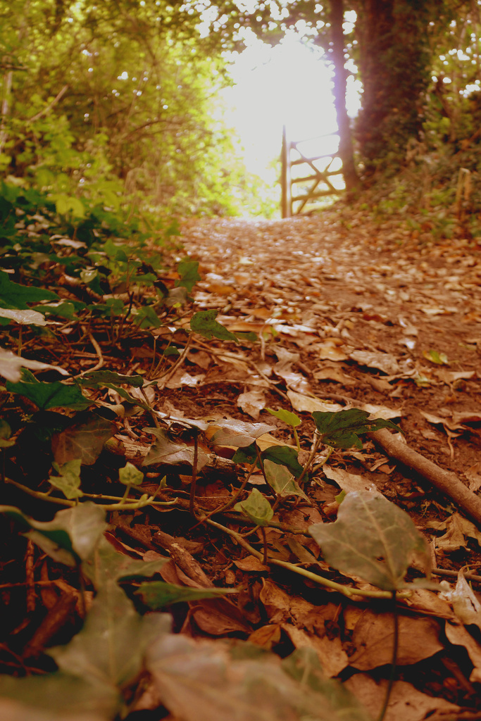 Woodland walk by newbank
