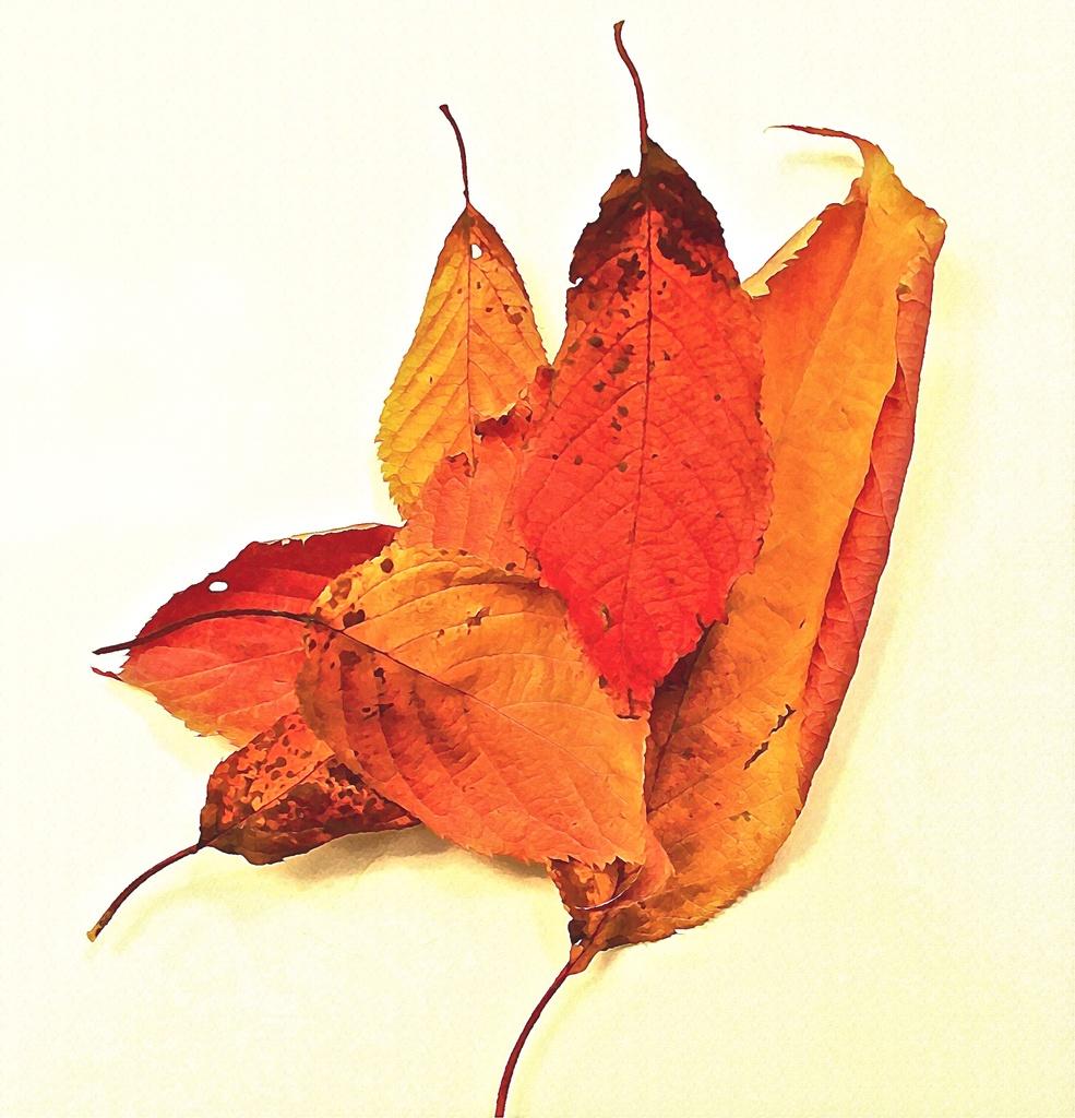 Autumn's gone.. by maggiemae