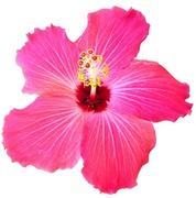 20th Jun 2014 - Perfectly Pink