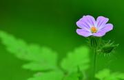 20th Jun 2014 - Tiny & Beautiful