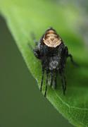 20th Jun 2014 - Spider who?